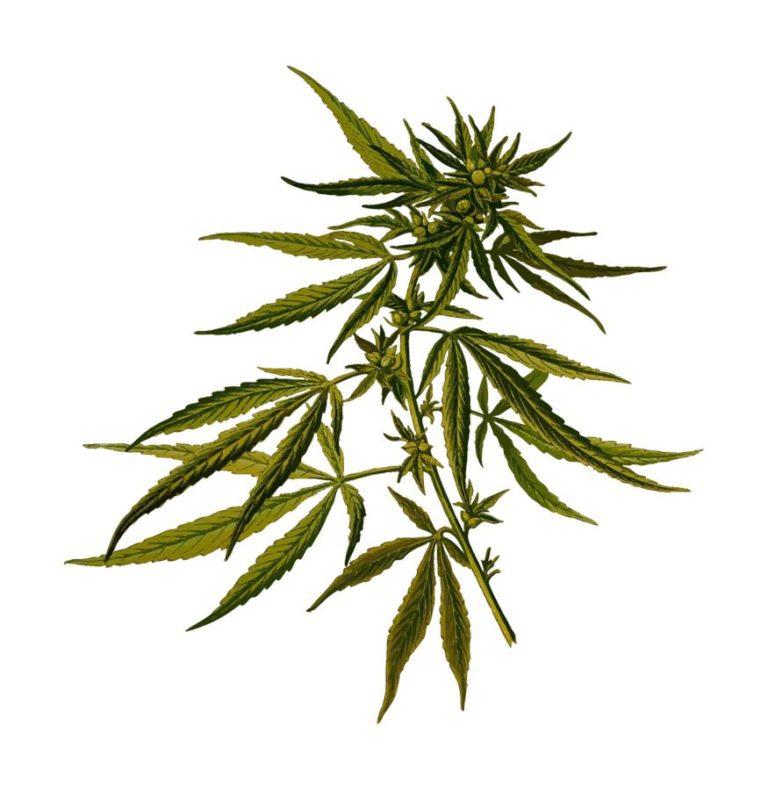 Sprzęt do wykorzystania przy uprawianiu marihuany