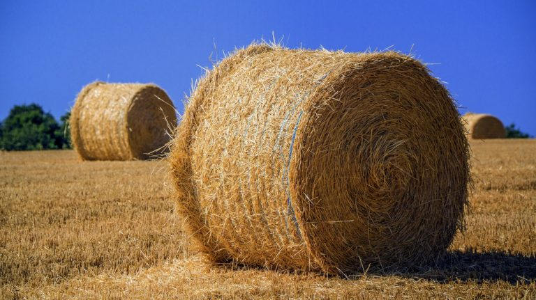 W jaki sposób może być realizowana ochrona zbóż?